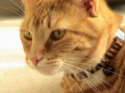 Morris the casino cat